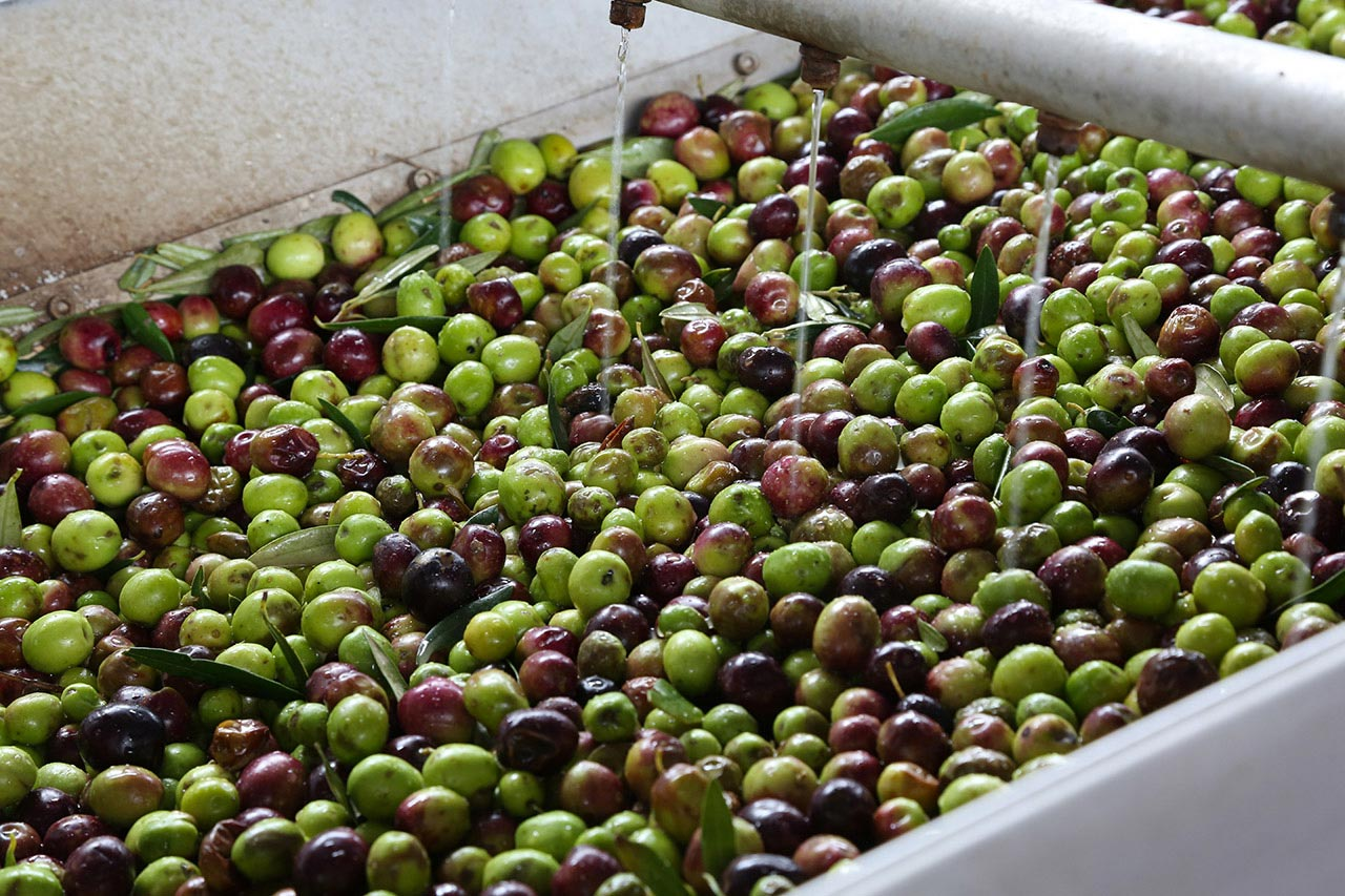 Frantoio olive Sicilia