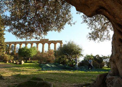 Valle dei Templi Agrigento - Sicilia