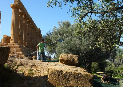 Ulivi della Valle di Templi di Agrigento affidati a Val Paradiso per la promozione e la commercializzazione dell'olio siciliano Diodoros